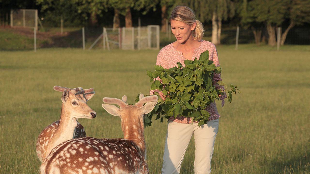 Hélène et les animaux en streaming direct et replay sur myCANAL