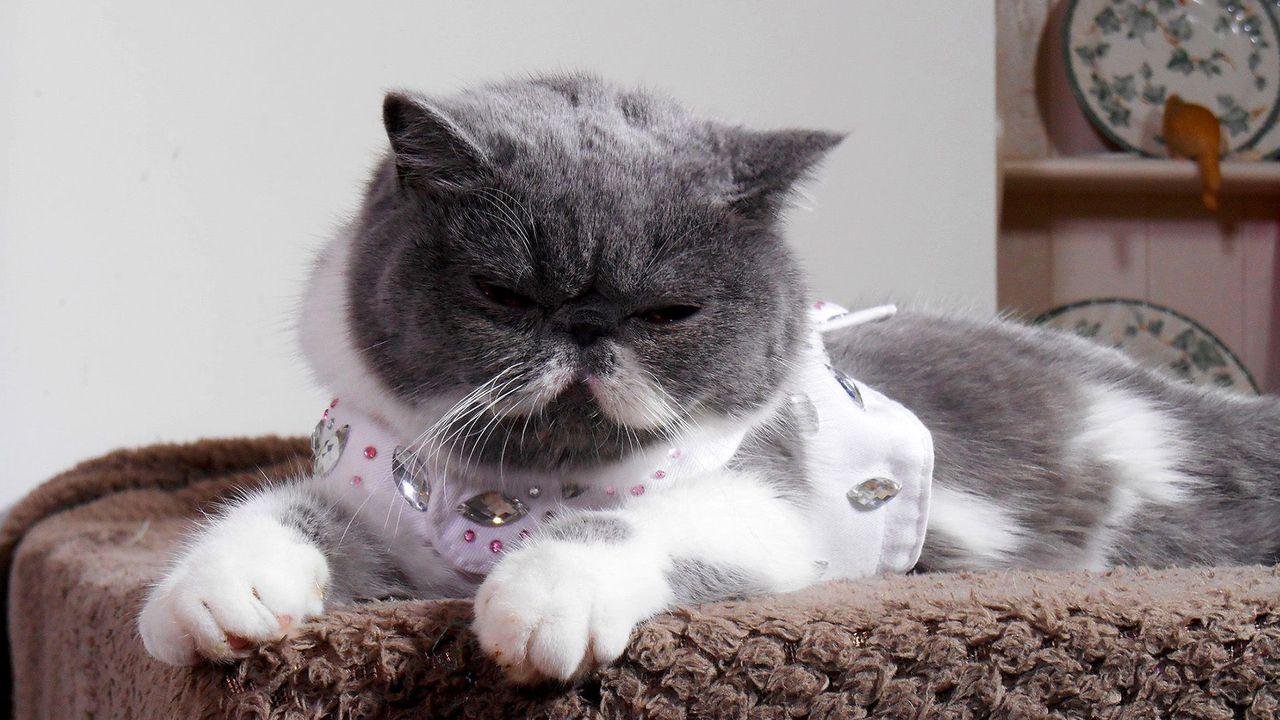Le zapping le plus chat en streaming direct et replay sur