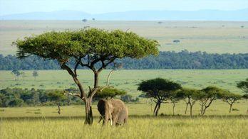 L'éléphant qui donna sa vie
