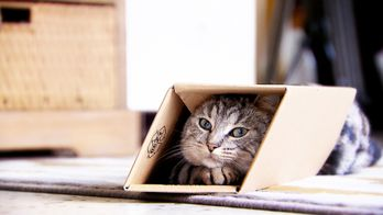 La vie secrète des chats