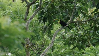 Barro colorado, l'île mystérieuse