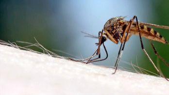 Zika, enquête sur une épidémie