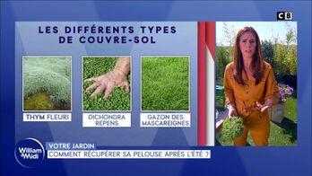 Comment récupérer sa pelouse après l'été ?