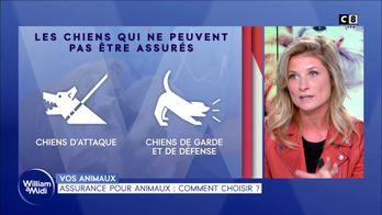 Assurance pour animaux : comment choisir ?