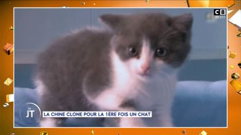 La Chine clone un chat pour la première fois