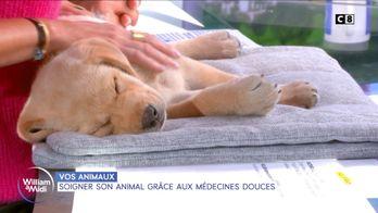 Soigner son animal grâce aux médecines douces