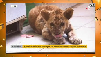 Le trafic des animaux sauvages : un commerce inégal qui devient de plus en plus fréquent