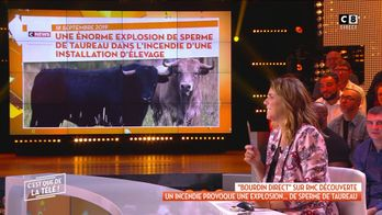En Australie, un incendie provoque une explosion de sperme de taureau