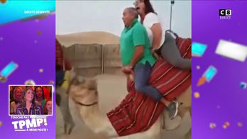 Les génies du PAF : Quand une sortie à chameau ne se passe pas comme prévue
