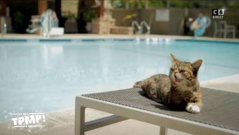 Le top 10 des vidéos qu'il ne fallait pas louper : La chatte la plus connue du monde est morte