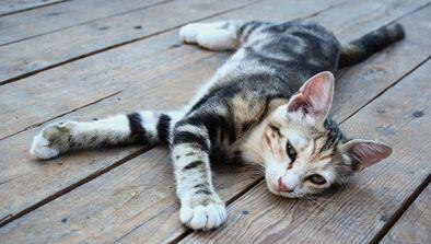 De nouveaux chats dans le quartier