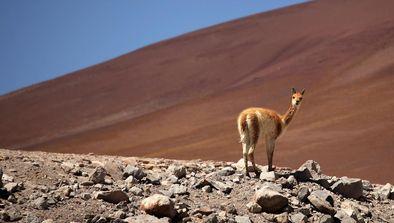 Au coeur du désert d'Atacama