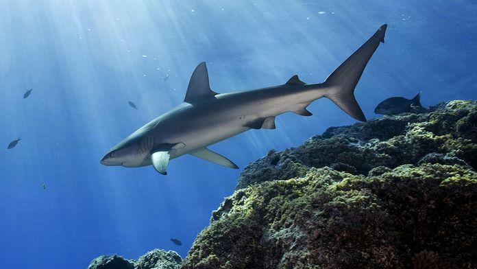 L'oasis aux requins