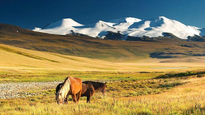 Mongolie, la chevauchée sauvage