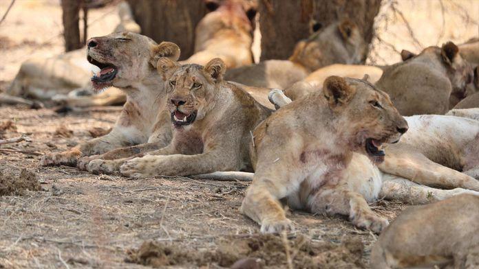 L'Afrique à l'état sauvage : Dynasties