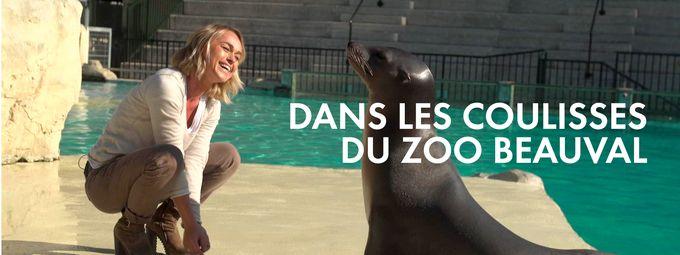 Zoo de Beauval : Dans les coulisses de l'un des meilleurs zoos du monde