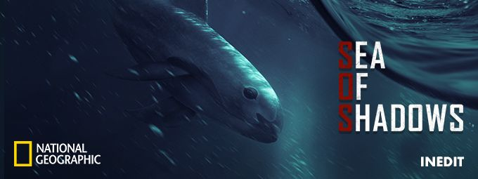 Sea of shadows - Inédit - En novembre sur NATIONAL GEOGRAPHIC
