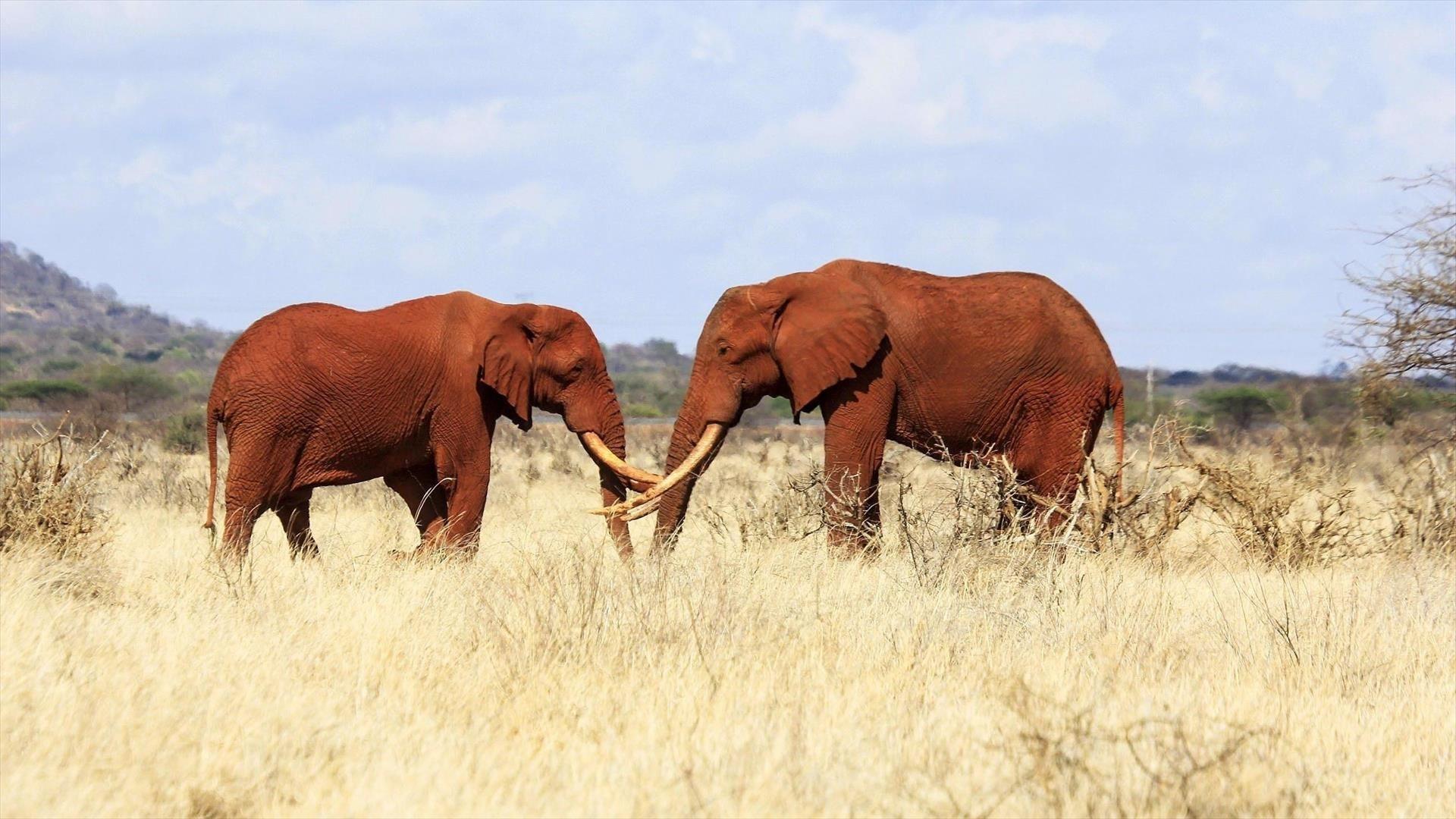Tsavo, la terre des éléphants rouges
