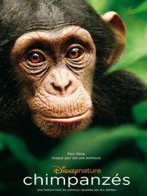 Chimpanzés : Les artisans du Bossou