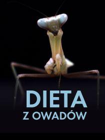 Dieta z owadów