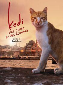 Kedi : des chats et des hommes
