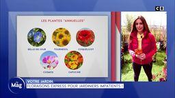 Votre jardin : Floraisons express pour jardiniers impatients !