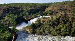 Ouganda, perches du Nil géantes