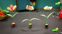 Les fleurs en papier