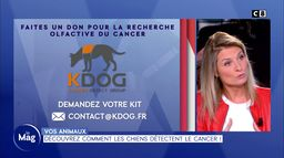 Découvrez comment les chiens détectent le cancer !