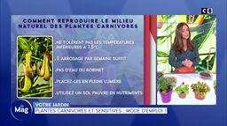 Plantes carnivores et sensitives : mode d'emploi !