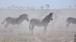 Okavango, les meilleurs moments : Une année en Afrique «Best of»