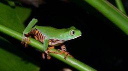 Histoires de grenouilles