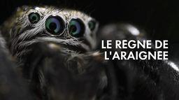 Le règne de l'araignée