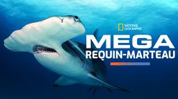 Mega requin-marteau