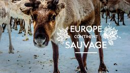 Europe, continent sauvage