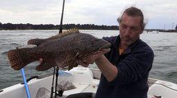 Pêche royale dans le Golfe du Morbihan