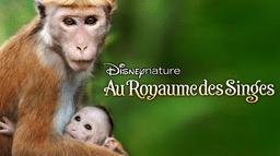Disneynature: Au royaume des singes