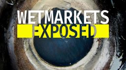 Wet Markets Exposed