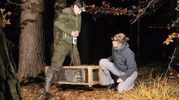 Les nouveaux envahisseurs : Chacal doré, chien viverrin et raton laveur