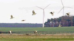 La science au secours des oiseaux : Opération outarde