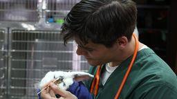 La clinique des animaux exotiques - S3 - Ép 5