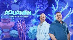 Aquamen : les as des aquariums