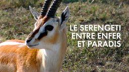 Le Serengeti, entre enfer et paradis