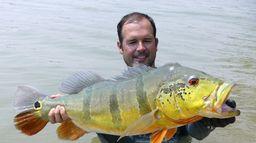Colombie, expédition peacock bass geants