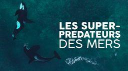 Les super-prédateurs des mers