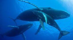 La sagesse des baleines
