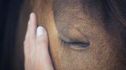 Gaspard fait du cheval