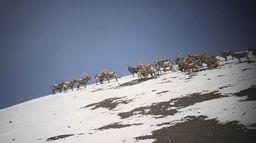L'ibex, une aventure kirghize