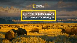 Au cœur des parcs nationaux d'Amérique