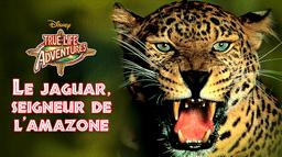 Le jaguar, seigneur de l'Amazone